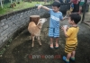 Our first trip to Aves World Broga Petting Zoo
